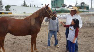 ¿Es difícil aprender a domesticar caballos?